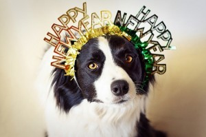 New Years Resolution - With your Pet